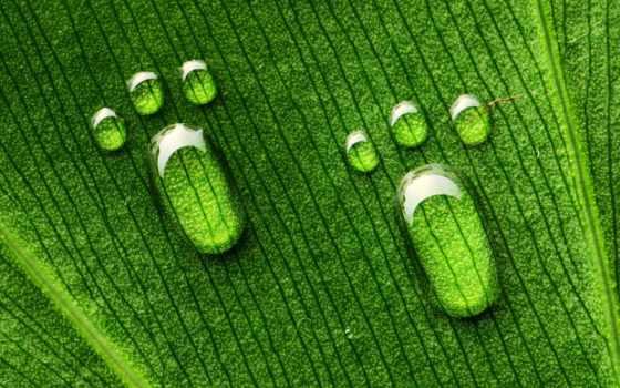 макро, лист, зелёный