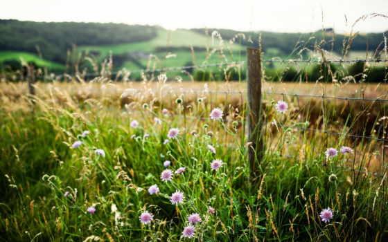 трава, дорога