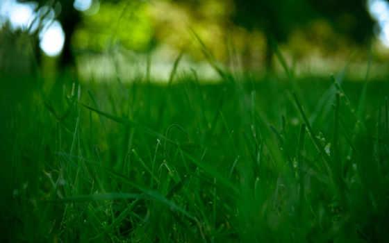 walls, зелёный, трава, desktop, youtube, аль,