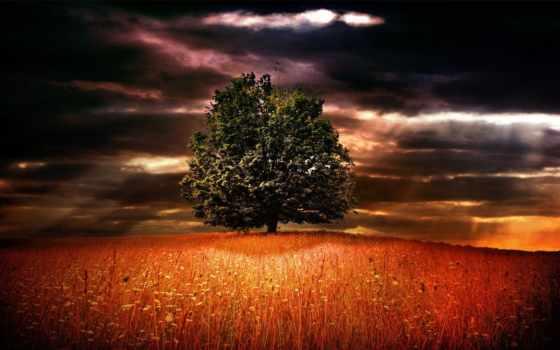 дерево, поле, одинокое, трава, небо, природа, oblaka,