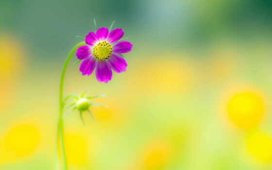 just, красиво, pinterest, pin, this, cvety, природа, one, другой,