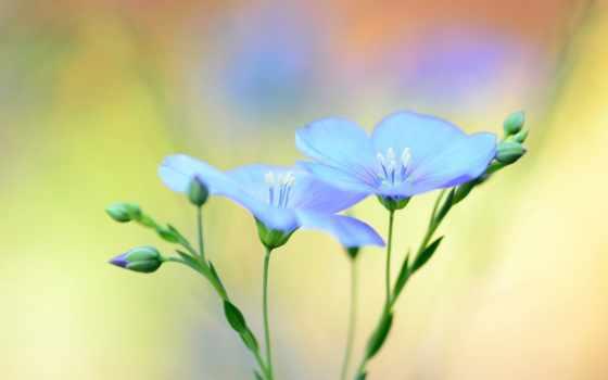 desktop, blue, фон, flowers, размытость, len,