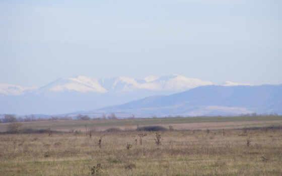 казахстан, степь, близко, apart, дерево, plain, grassland, characterize, ecoregion