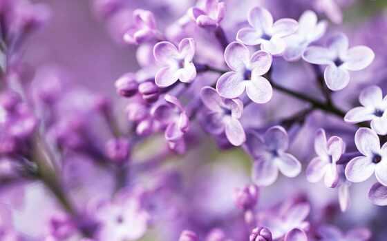 весна, cvety, день