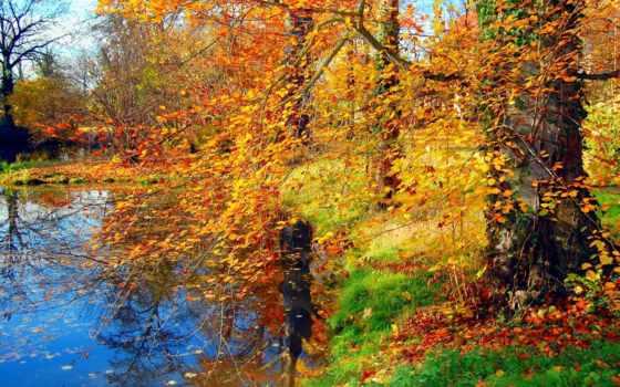 осень, природа, деревья