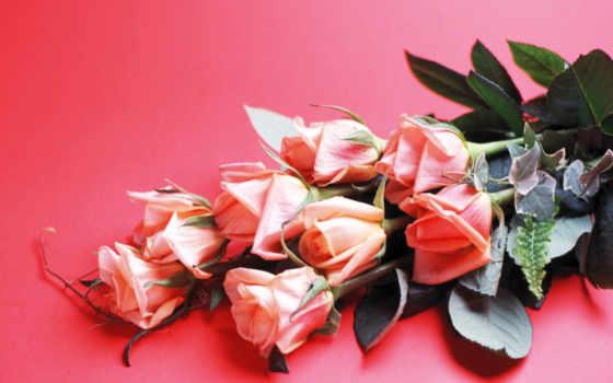 всем, video, розы