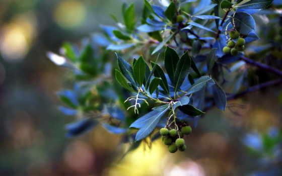 cvety, листва, зелёный, трава, вас, любую, white, радуют, пору, года, растения,