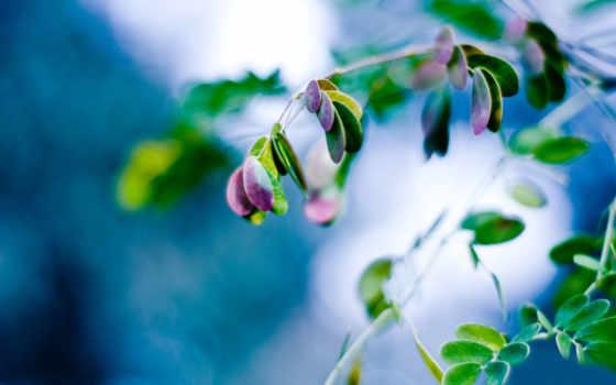 plantas, hoja, naturaleza, planta, макро, gota, fondo, pantalla, hojas, primer,