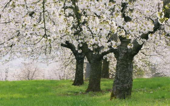 подборка, цвету, garden, class, trees, master, фоны,