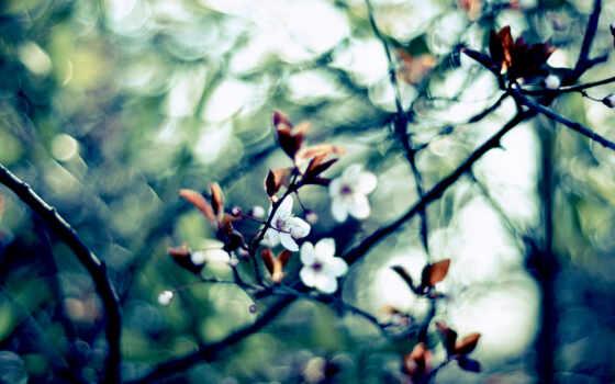 весна, компьютер, цветение, размытость, branch, cherry, ноутбук, макро, cvety, flare