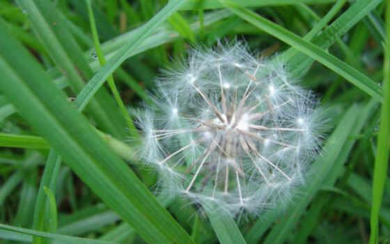природа, цветы, зелёный, растение, fore, mist