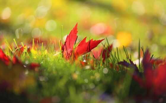 осень, трава, природа, makryi, side, лист
