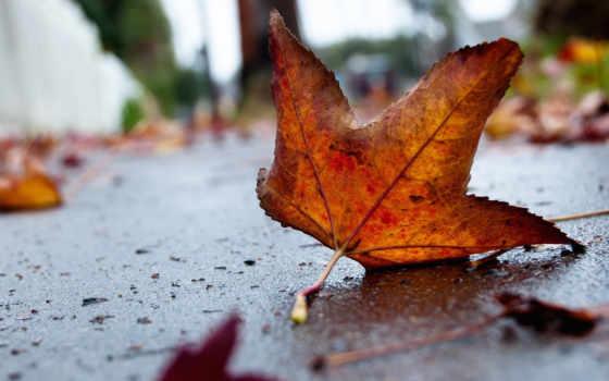 лист, осень, дорога, асфальт, фокус, желтый, яркий, оранжевый, leaf, macro, дороге, резкость, desktop,