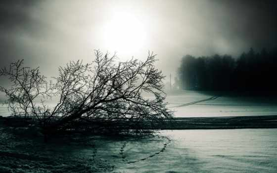 следы, снег, туман, дерево, зима, белое, мрачно, чёрно,