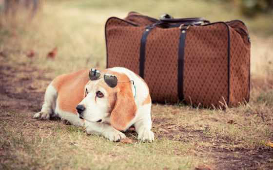 dog, travel, with