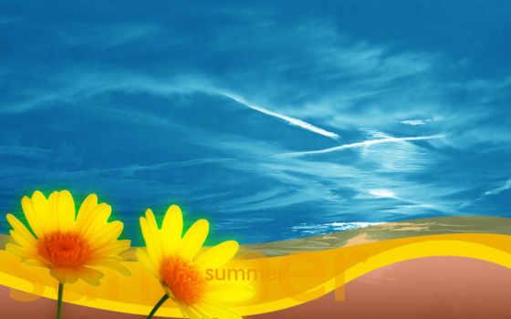 цветы, summer, летние