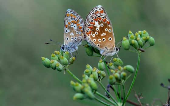 любов, love, priroda