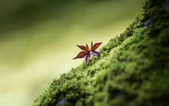 ,мох,лист,листик,зелень,