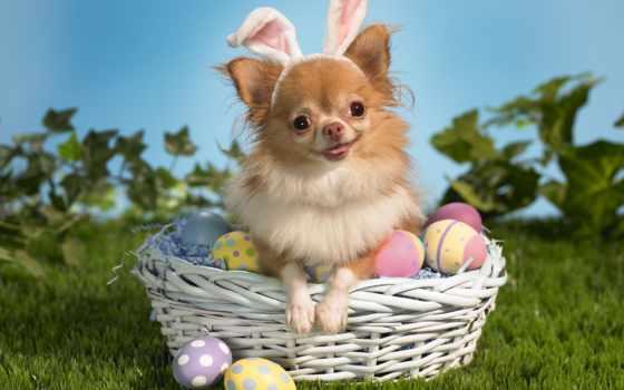 easter, яйца, собака