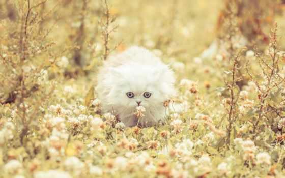 котенок, flowers, трава, телефон, ноутбук, планшетный, пушистый, free,