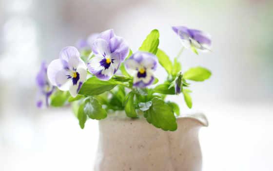 amor, perfeito, parede, papel, flores, виола, букет, ensolarado, dia,