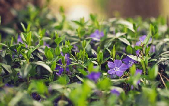 цветы, flowers, трава