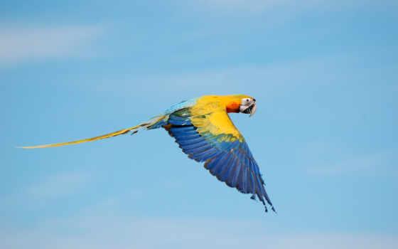попугай, летит