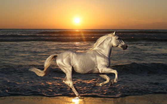 озеро, природа, лошадь, winter, stallion,