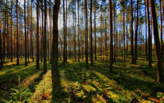 лес, яndex, весна, пользователя, коллекция, коллекциях, природа, леса,