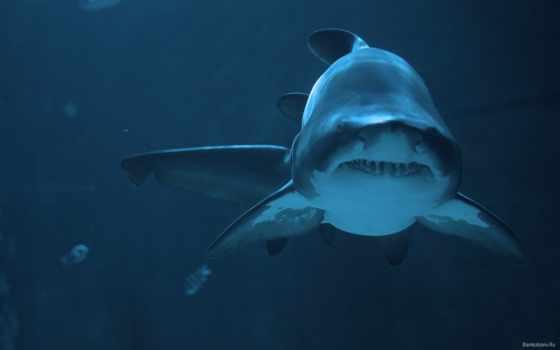 красивые, акулы, world