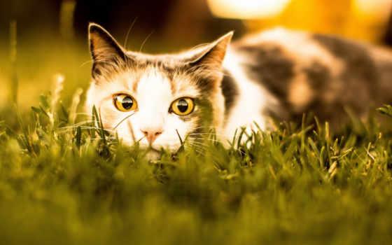 кот, траве, взгляд
