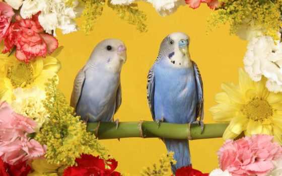 цветы, красивые, полевые, попугаи, галереи, животных, desktopwallpape, картинок, коллекция, подборка,