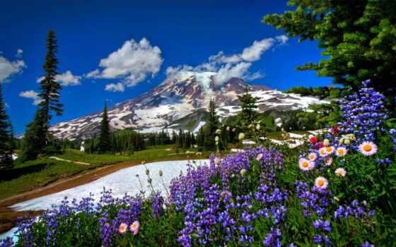 горы, цветы, природа Фон № 139311 разрешение 1920x1200