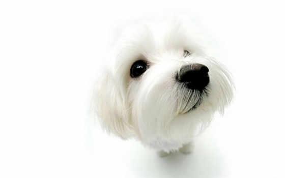 parásitos, externos, los, собака, del, perro, productos, perros, дешевые, que,