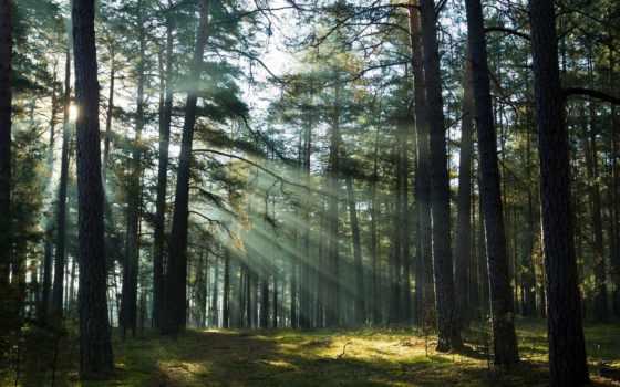 лес, восход, misty, foggy, stock, фотографий, изображение, закат,