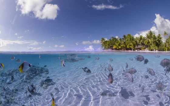 море, fish, ocean