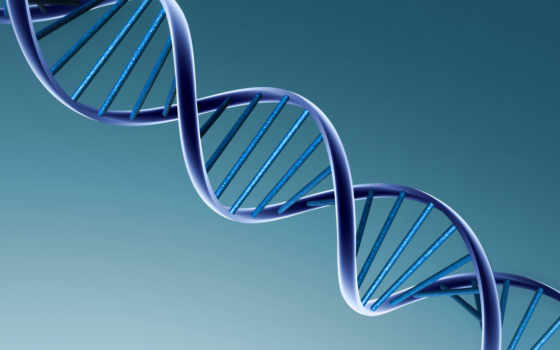 человека, геном, генов