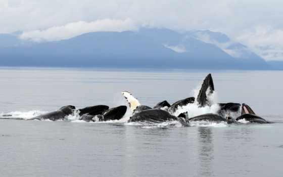 киты, высоком, качестве