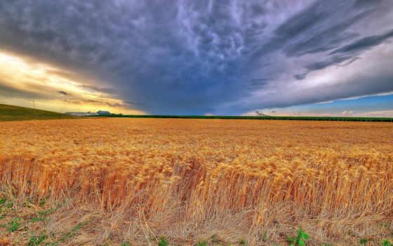 kansas, пшеница, summer