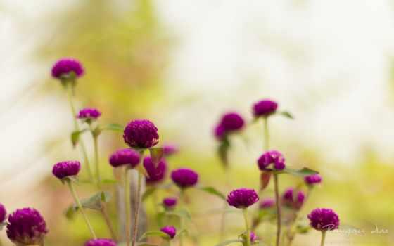 flowers, resolutions, widescreen, high, best, цветы, коллекция,