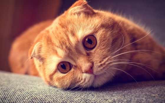 кот, кошки, взгляд Фон № 136559 разрешение 3840x2160