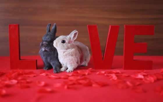 кролик, love, white, два, лепесток, red, animal
