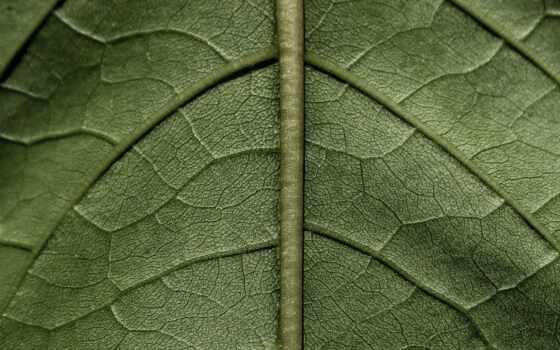 зелёный, leaf, во