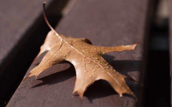 лист, осенний