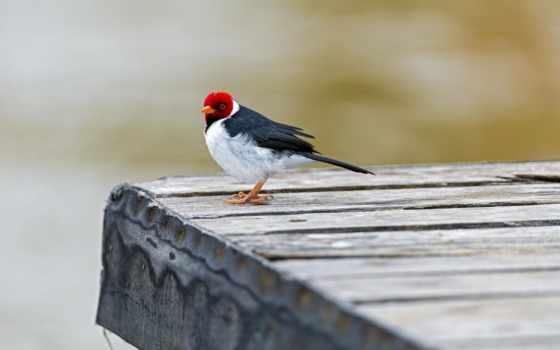 птица, мост
