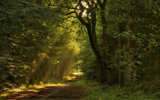 priroda, les, тропинка