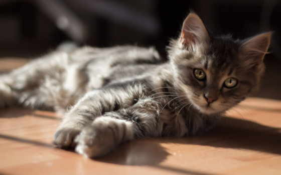котенок, изображение