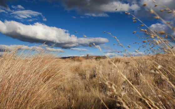 природа, трава, небо Фон № 135282 разрешение 1920x1080