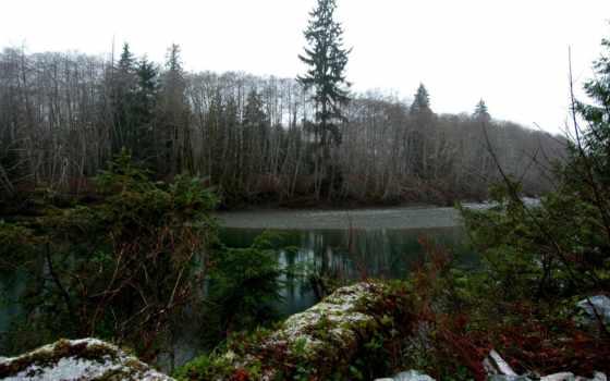 swamp, лес, река, дремучий, зелёный, ветки, осень,