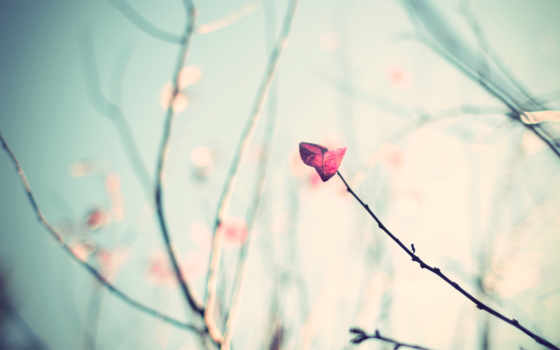 цветы, flowers, фон, cute, розовый, природа, small,